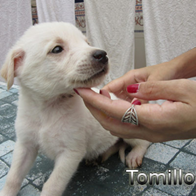 Tomillo-(5)web