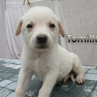 Tomillo-(7)web