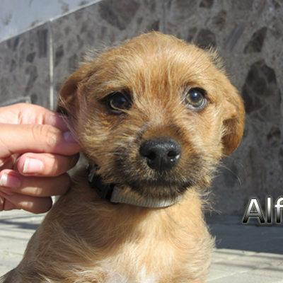 Alfil-(2)web