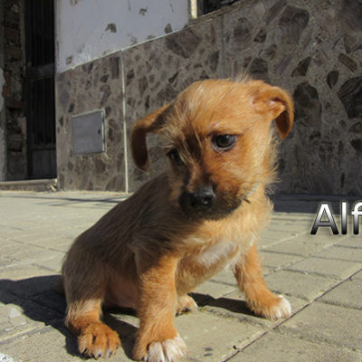 Alfil-(5)web