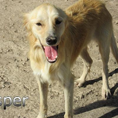 Casper-(10)web