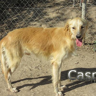 Casper-(11)web