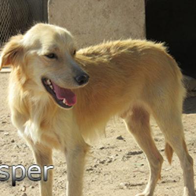 Casper-(1)web