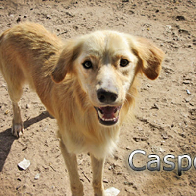 Casper-(2)web