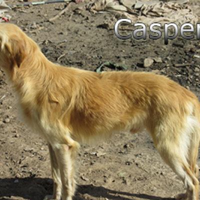Casper-(9)web