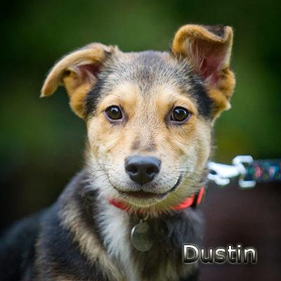 Dustin-(11)web