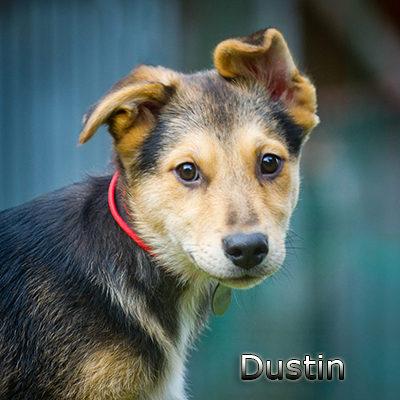Dustin-(1)web