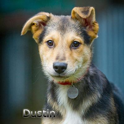 Dustin-(6)web