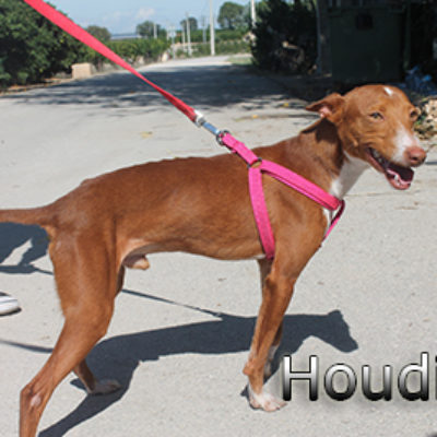 Houdini-(11)web