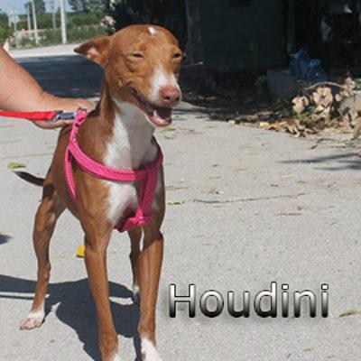Houdini-(9)web