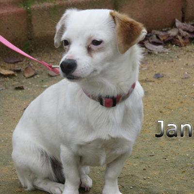 Jana-(10)web