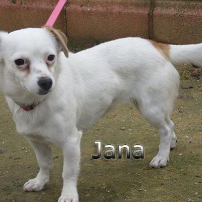 Jana-(9)web