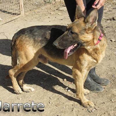 Jarrete-(10)web