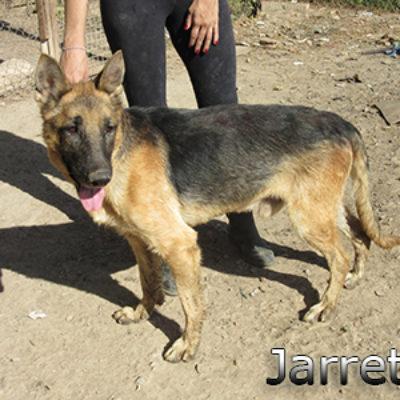 Jarrete-(11)web