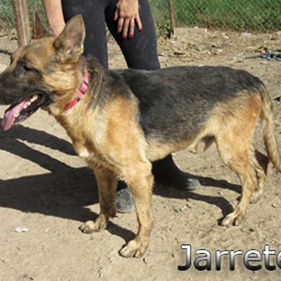 Jarrete-(12)web
