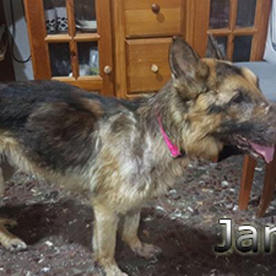Jarrete-(2)web