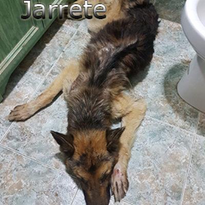 Jarrete-(4)web