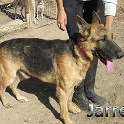 Jarrete-(7)web