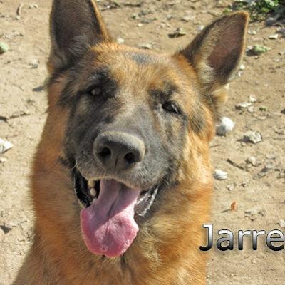 Jarrete_Update_14012020-(1)web