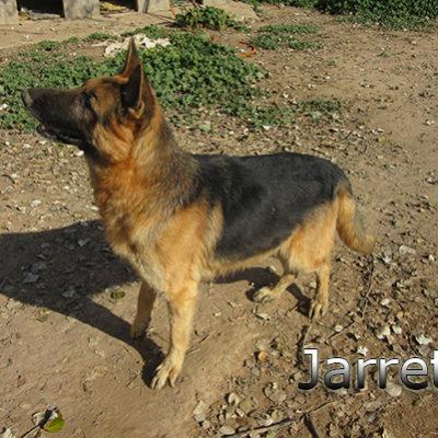 Jarrete_Update_14012020-(2)web