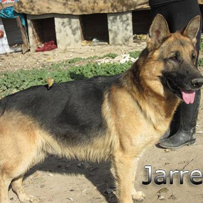 Jarrete_Update_14012020-(6)web