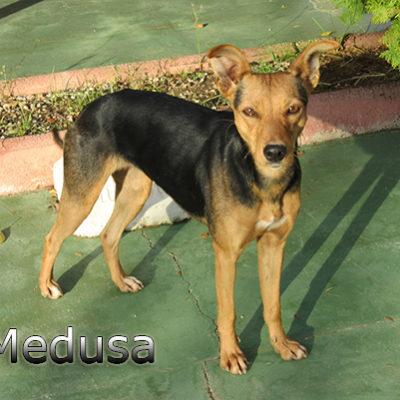 Medusa-(7)web