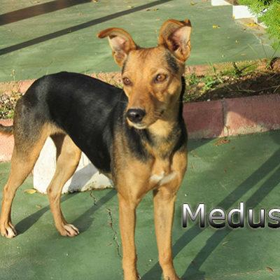 Medusa-(8)web