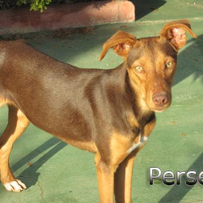 Perseo-(10)web