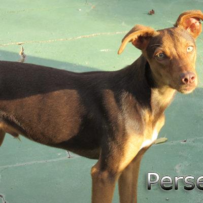 Perseo-(1)web