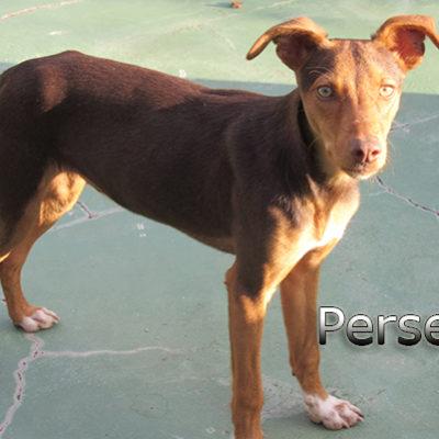 Perseo-(4)web
