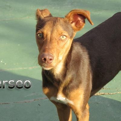 Perseo-(7)web