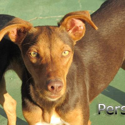 Perseo-(8)web