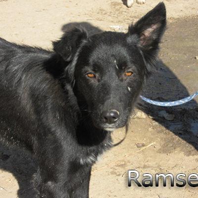 Ramses-(3)web