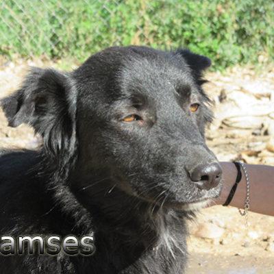 Ramses-(4)web
