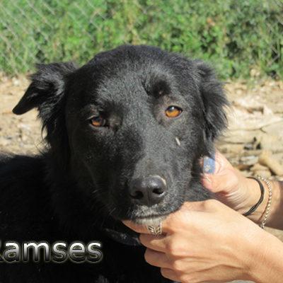 Ramses-(5)web