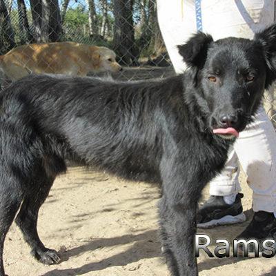 Ramses-(9)web