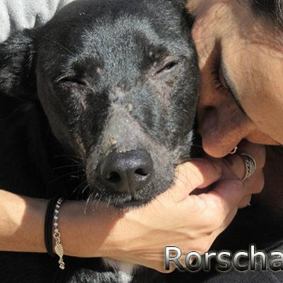 Rorschach-(6)web