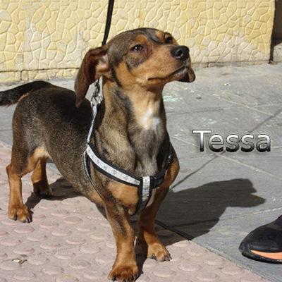 Tessa2-(3)web