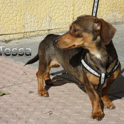 Tessa2-(4)web