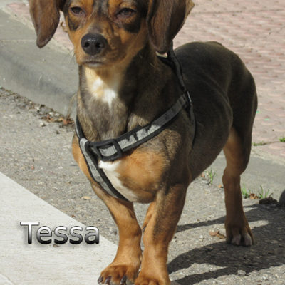 Tessa2-(8)web