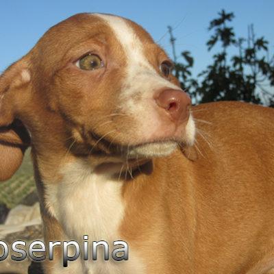 Proserpina-(12)web