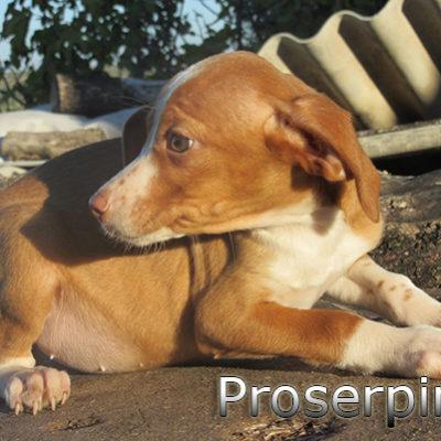 Proserpina-(2)web