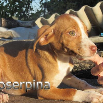 Proserpina-(3)web