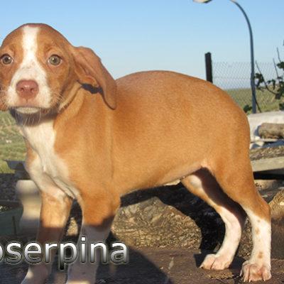 Proserpina-(9)web