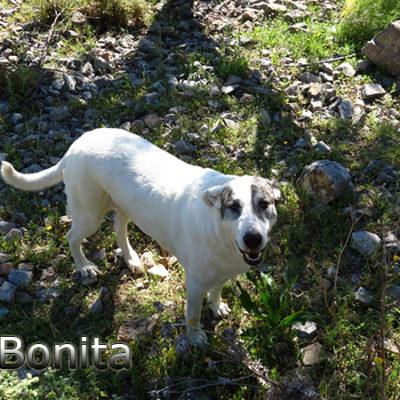 Bonita-(1)web
