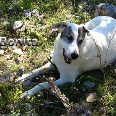 Bonita-(2)web
