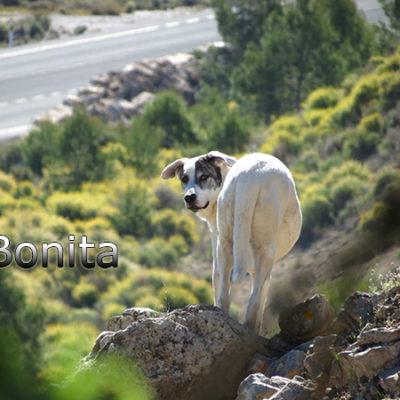 Bonita-(3)web