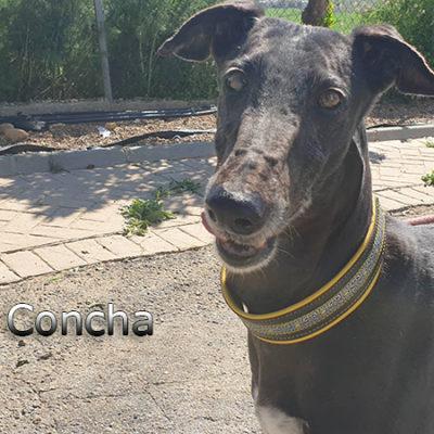 Concha-(6)web