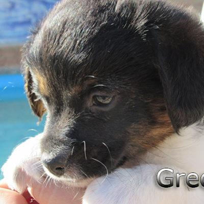 Grecia-(1)web