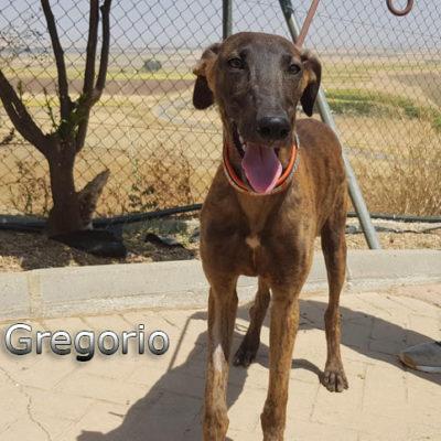 Gregorio-(13)web